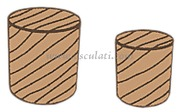 Accessori Nautica Tappi in teak 6 mm (100 pz)  [7160150]